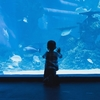 水族館で気づいた違和感