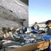 名高い鮭の産地・・『銀聖』ご存知でしょうか?