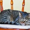 猫ちゃんに快適な眠りを!おすすめベッドはこれ!