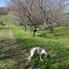 日帰り温泉ヘルシーパーク裾野のお隣、梅の里を散策~(裾野市)