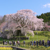 【奈良】又兵衛桜-戦国武将ゆかりの美しい垂れ桜