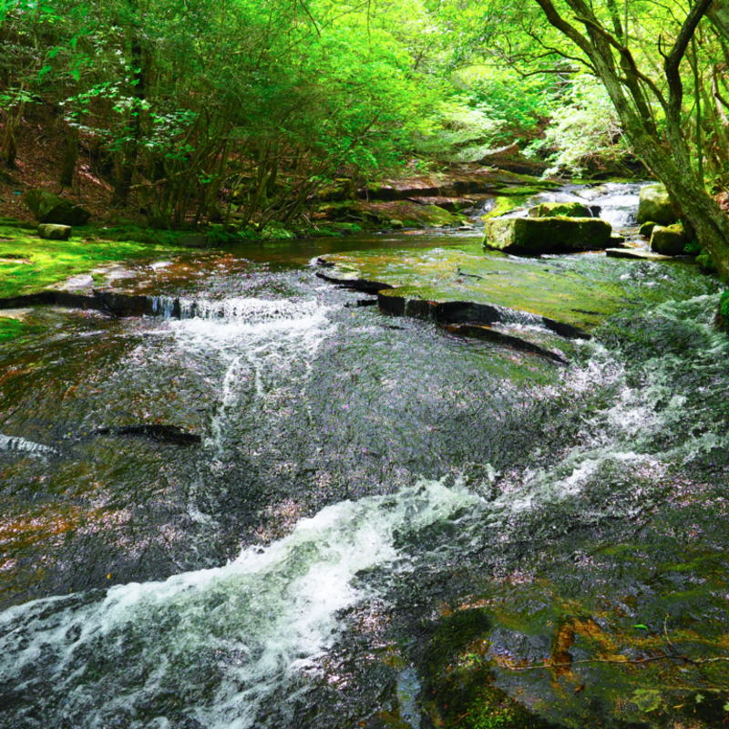 KYOTOSIDEライターが教えるオススメ観光散策②「森の京都」新緑のるり渓ハイキングコース