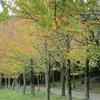秋の水戸植物公園