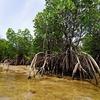 予想以上に難しいマングローブ林の撮影タイミングを徹底解説【星野リゾート西表島ホテル編】