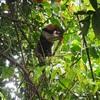 【コスタリカ最後の秘境】たくさんの珍獣に出会えるコルコバド国立公園ツアー