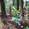 2018年度 第5回 森林自然散骨