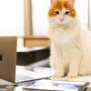 Macの連絡先カードをCSVファイルに変換してみよう