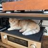 猫のホットスポット