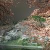 皇居まわりの夜桜のライトアップ綺麗すね