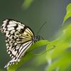 蝶の飛翔を、4Kフォトで