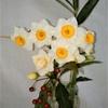 新年のお花