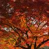 奈良の紅葉を富士フイルムの色で その2