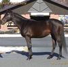 2022年新種牡馬:サトノクラウン