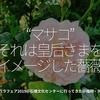 """502食目「""""マサコ"""" それは皇后さまをイメージした薔薇」春のバラフェア2019@石橋文化センターに行ってきた@福岡・久留米"""