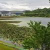 こいの池(愛知県長久手)