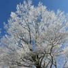 霧氷の丹沢冬景色!大倉尾根から花立山荘~塔ノ岳登山(前編)