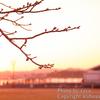 春待ちて**桜をドラマチックに撮ってみよう