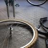 水元公園サイクリング