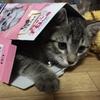 なぜ猫は爪とぎをするの?楽しくストレス解消【キャットわくわくポール】