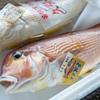 2019年6月11日 小浜漁港 お魚情報