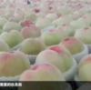 桃の季節です🍑
