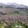 観光で和歌山の梅林に行くなら、みなべ梅林
