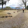 熊本県人吉城散策と大きな栗が入った栗まんじゅう