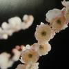 1月5日花と花言葉・歌句