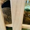 ウサギのちまき今日の2枚『ちょい乗せ』