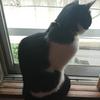 今日の黒猫モモ&白黒猫ナナの動画はお休みです