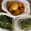 刀豆と春菊と蜜柑