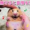 【ハムスター 動画】ハムスターは、撫でられると愛情を感じとってくれる動物です♪