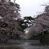 夙川公園へ桜を見に行く(兵庫)…過去20170408