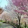 【東山動物園】さくらスタンプラリー 4/13