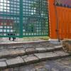 初宮神社と猫たち