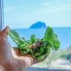 済州島(チェジュ島)グルメ #海を見ながらチェジュの味覚を満喫!(1) 「海を見た豚」