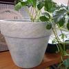 ダイソーのテラコッタ鉢をリメイク。