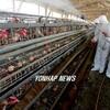 韓国「鳥インフルエンザ(AI)農場、178ヶ所の内156ヶ所の農場で不適正な消毒剤使用」