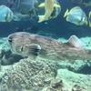 美ら海水族館で素人が見るべき面白い魚を素人が10選してみた!
