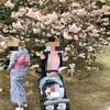 新宿御苑でお花見♡楽しいけど、虫やヤブ蚊に注意