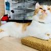 【猫学】思わぬ事故につながることも?猫の首輪の選び方