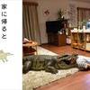 【日本映画】「家に帰ると妻が必ず死んだふりをしています。 〔2018〕」ってなんだ?