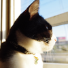 今日の黒猫モモ&白黒猫ナナの動画ー834