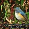 都立公園雑木林のあおの鳥達