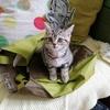 ドイツの猫🐈グッズ その4 (番外編)
