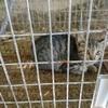 子猫2匹捕獲、2日で5にゃん