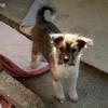 野犬の子・元苗とちびスリーの散歩動画