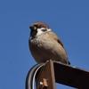 ディズニーランドに行って鳥の写真撮影。