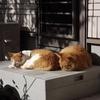 とある家の猫の歴史