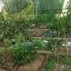 家庭菜園に台風被害発生 即日復旧